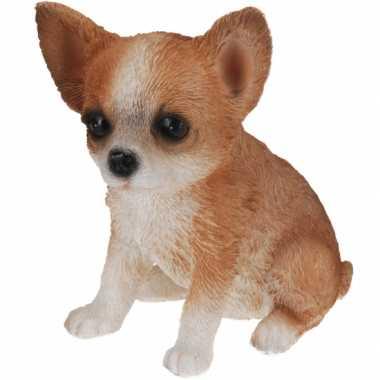 Bruin chihuahua honden beeldje kopen