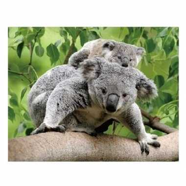 D magneten koala beertjes beeldje kopen