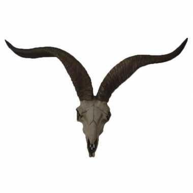 Decoratie antilope schedel hoorns beeldje kopen