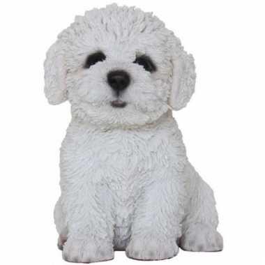Decoratie beeld hondje bichon frise beeldje kopen