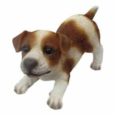 Decoratie beeld jack russel puppy honden bruin/wit beeldje kopen