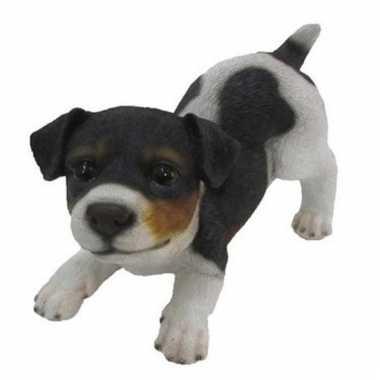 Decoratie beeld jack russel puppy honden tricolor beeldje kopen