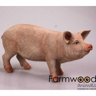 Decoratie beeld varkens/biggen beeldje kopen
