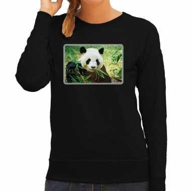 Dieren sweater / trui pandaberen foto zwart dames beeldje kopen