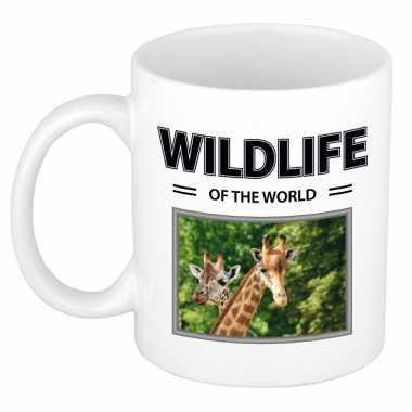 Giraf mok dieren foto wildlife of the world beeldje kopen
