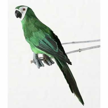 Groene decoratie ara papegaaien dierenbeelden beeldje kopen