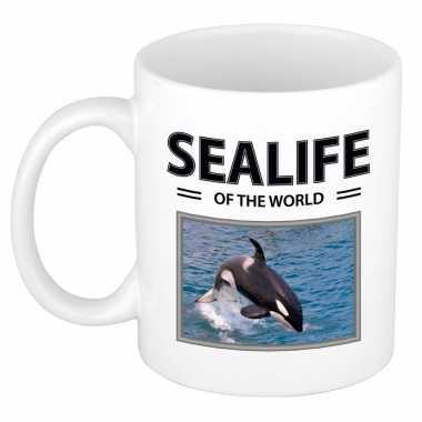 Orka mok dieren foto sealife of the world beeldje kopen