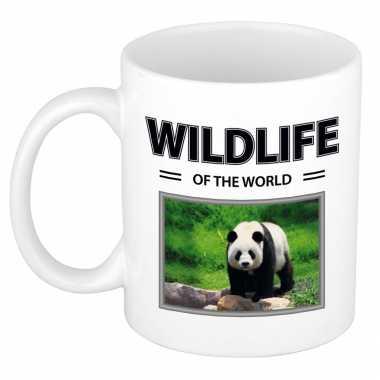 Panda mok dieren foto wildlife of the world beeldje kopen