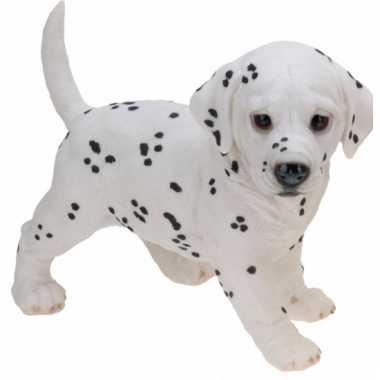 Stenen Dalmatier puppy staand beeldje kopen