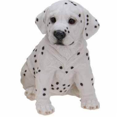 Stenen Dalmatier puppy zittend beeldje kopen