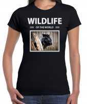 Zwarte panter t shirt dieren foto wildlife of the world zwart dames beeldje kopen